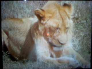 ケニア・タンザニア・サファリ14日間|飢えと睡魔で大変なんだけど、なんか可愛かった♥