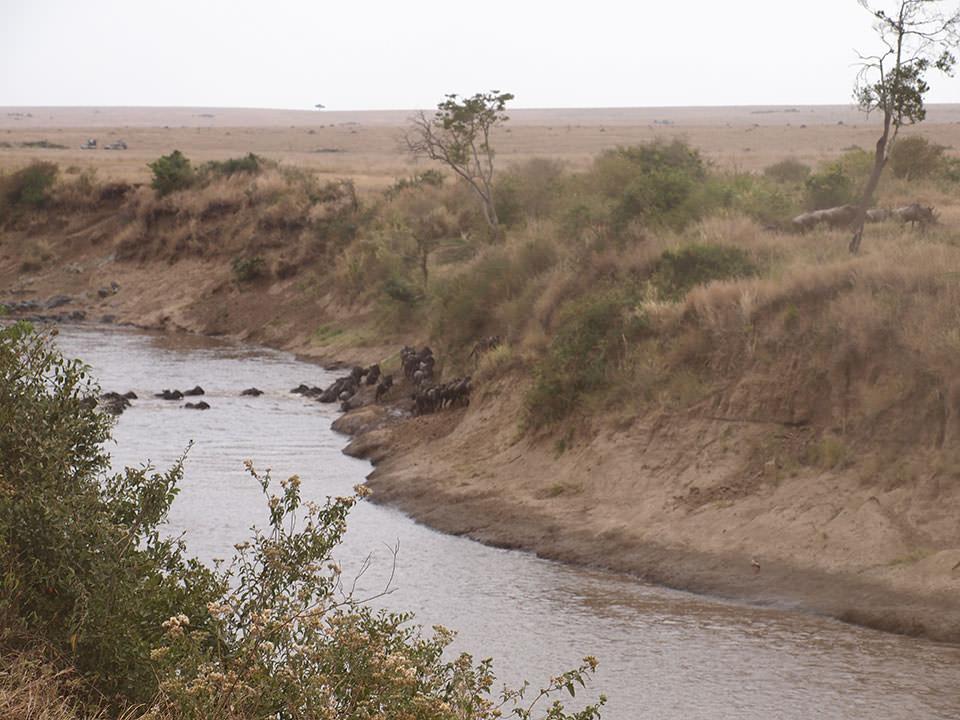 臆病者のヌーの大群がさんざん迷ったあげく、川を渡った瞬間をとらえた時とても感動しました。