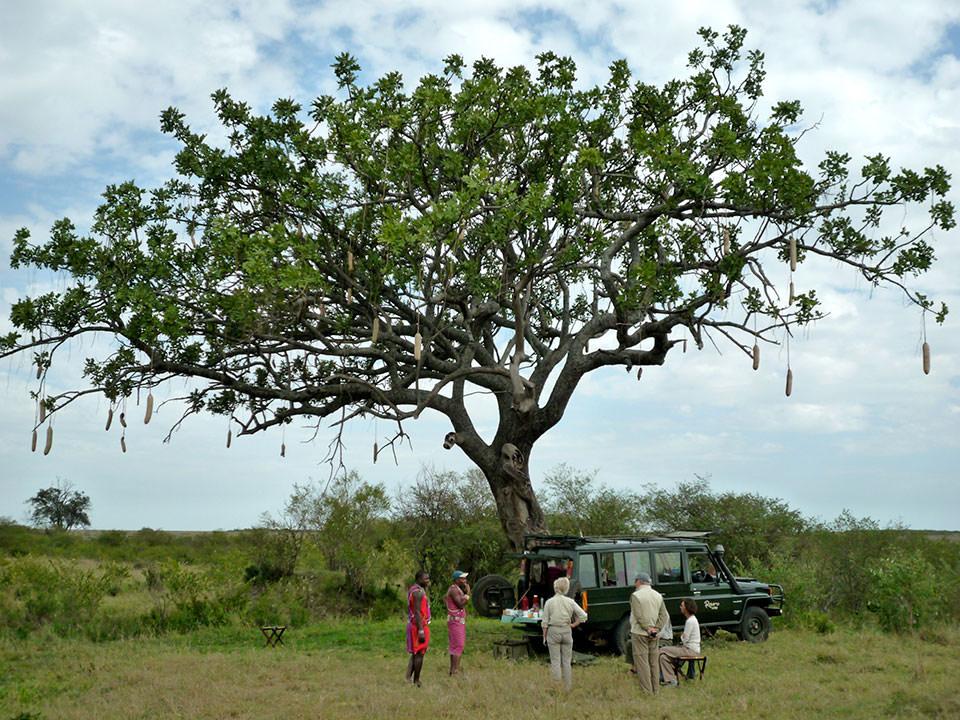 ソーセージツリーの木下で〜マサイと私〜仲良くサファリましょ〜♪