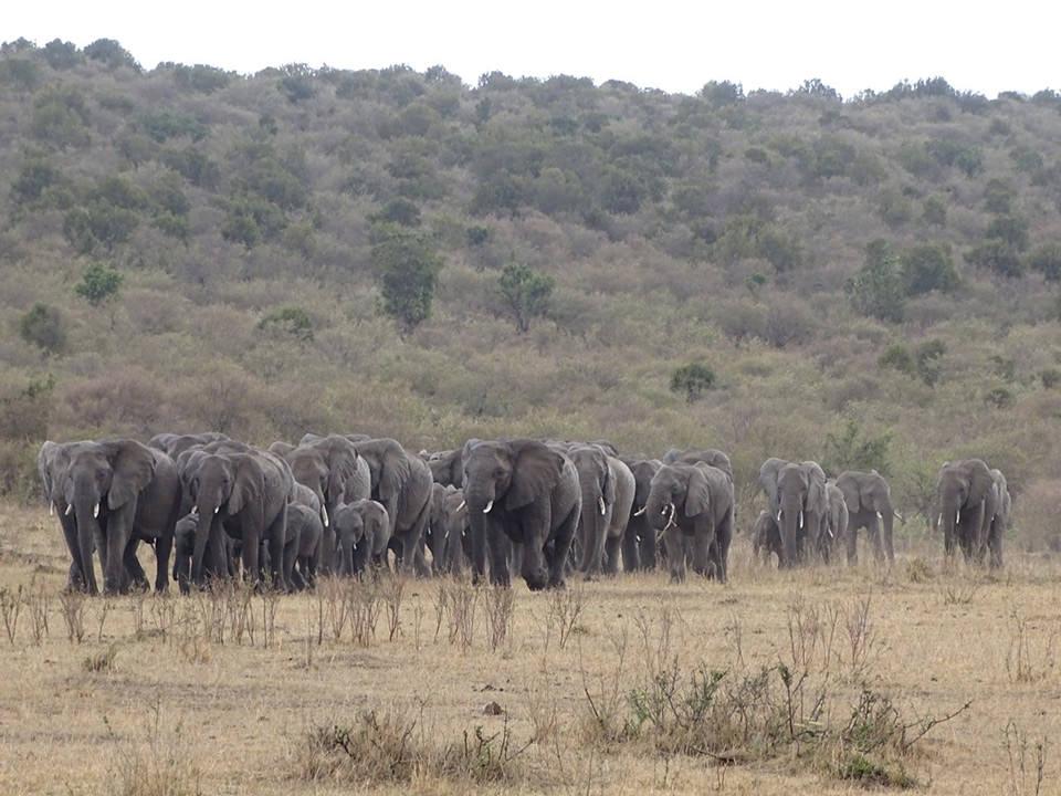 マサイマラではたくさんの動物に出会えました。