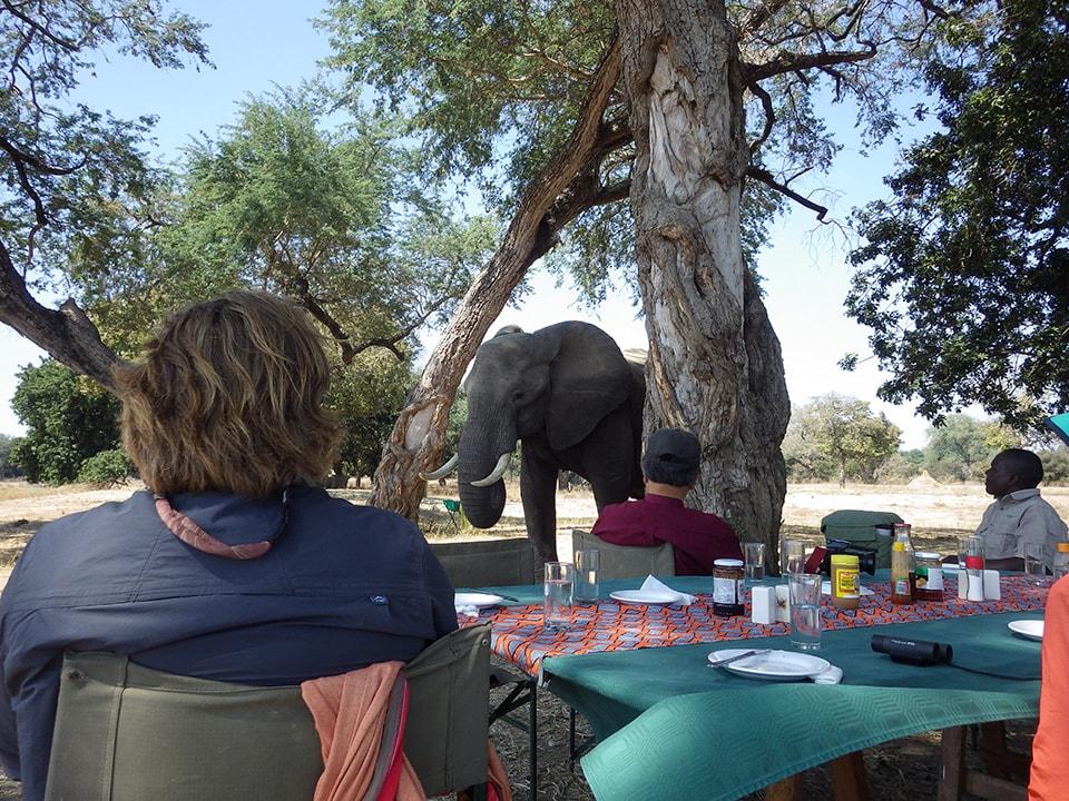 昼食後に休憩していたら1頭のゾウが近寄ってきました。この後さらに近寄って(2m未満!)来ましたが、ビビッてしまいシャッターが押せませんでした…