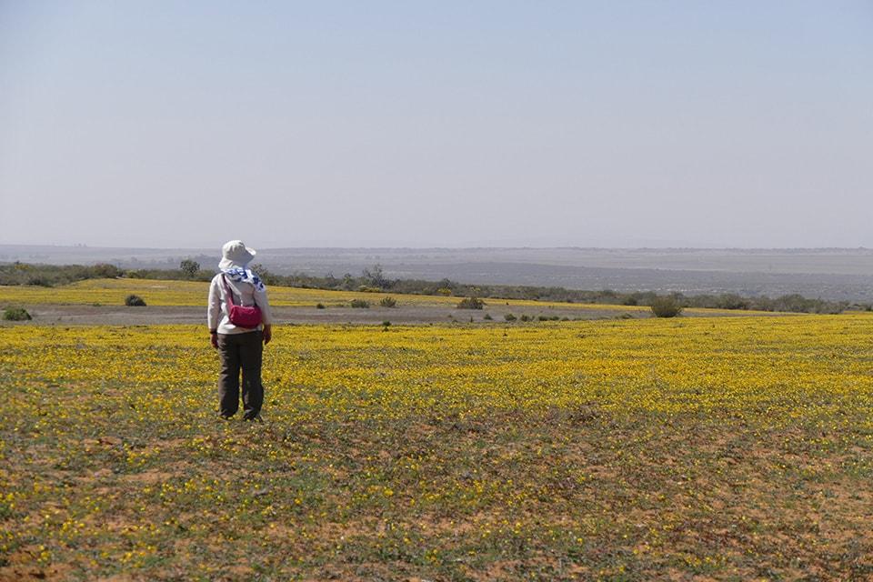 ドライブの途中で見かけた花畑です。南アフリカの固有種がたくさん咲いていました。