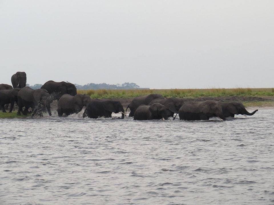 1日2回、水を飲みに川へやってくる象さんたち。子象が川に全身浸かりながらも一生懸命わたっている。かわいい!!