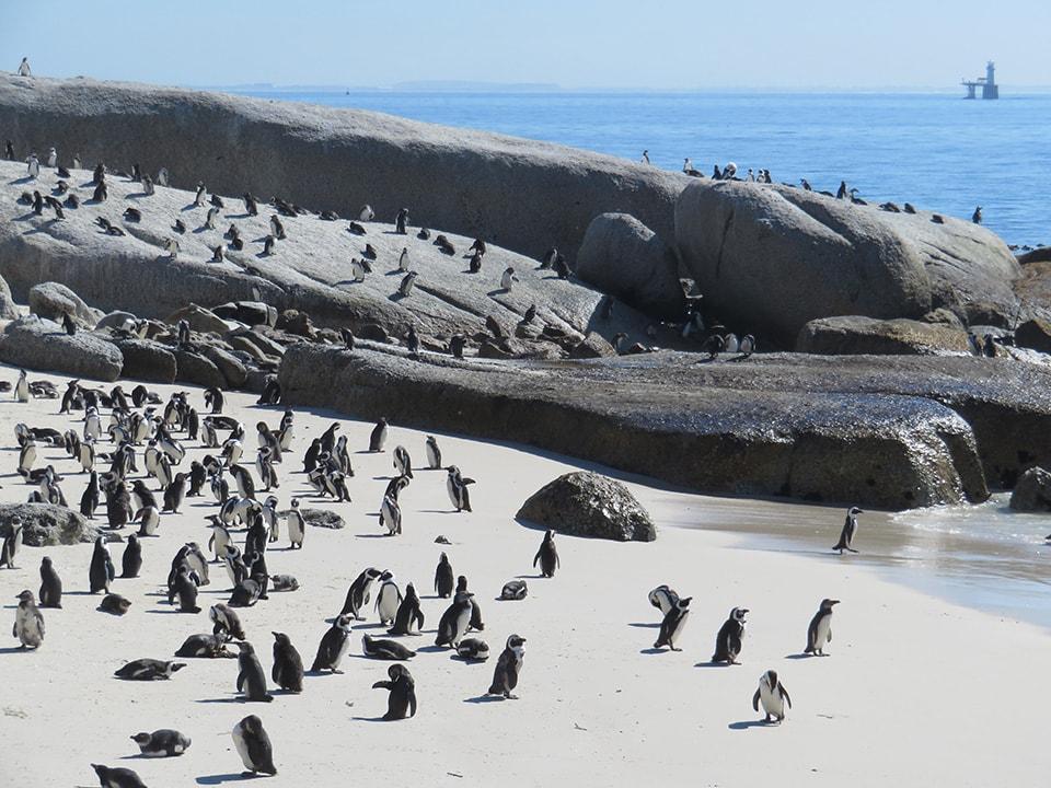 野生のペンギンがいっぱい!桃源郷です!鳴き声も力が抜ける感じでたまらない。