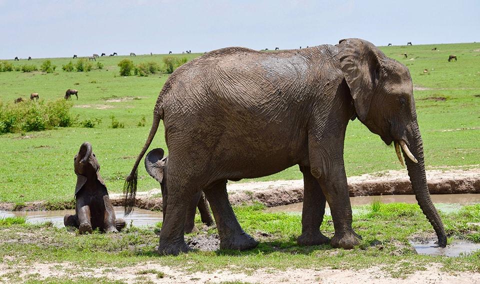 小象の水遊び姿がとても愛らしかったです。