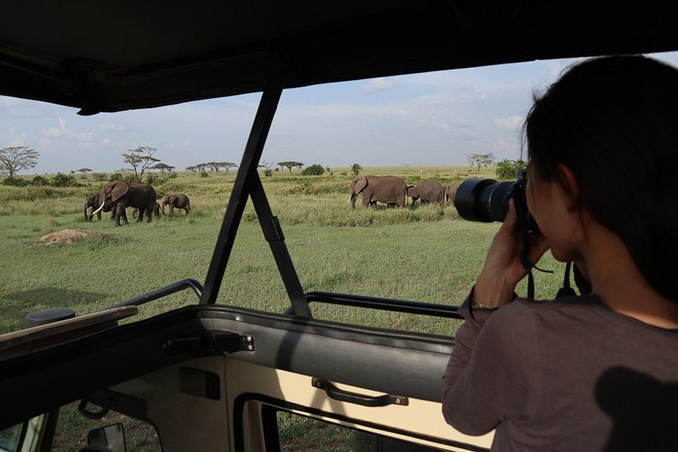 ゾウの一家を数回発見。どの一家も、前と後ろを大きなゾウが歩き、敵から守るように小さな子ゾウが真ん中を歩いていました。子ゾウに胸キュン。