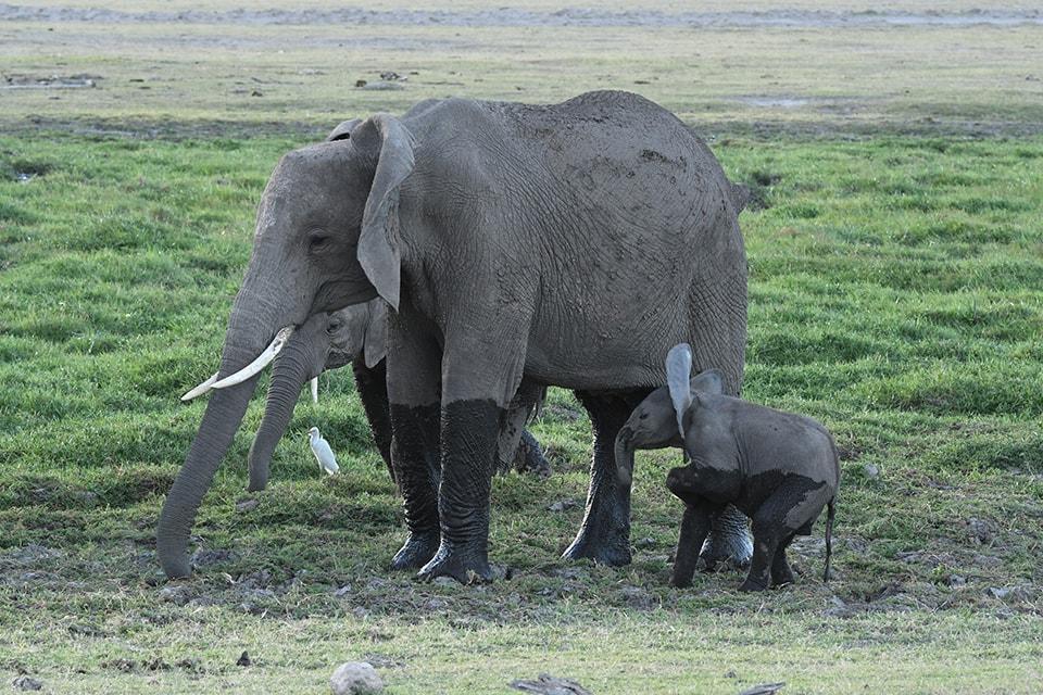 初日から、象は沢山見ましたよ。象好きにはたまらないはず。親子の絆?母親は常に外敵から子供を守って動いてます。何かあれば、体を張る覚悟が。。。