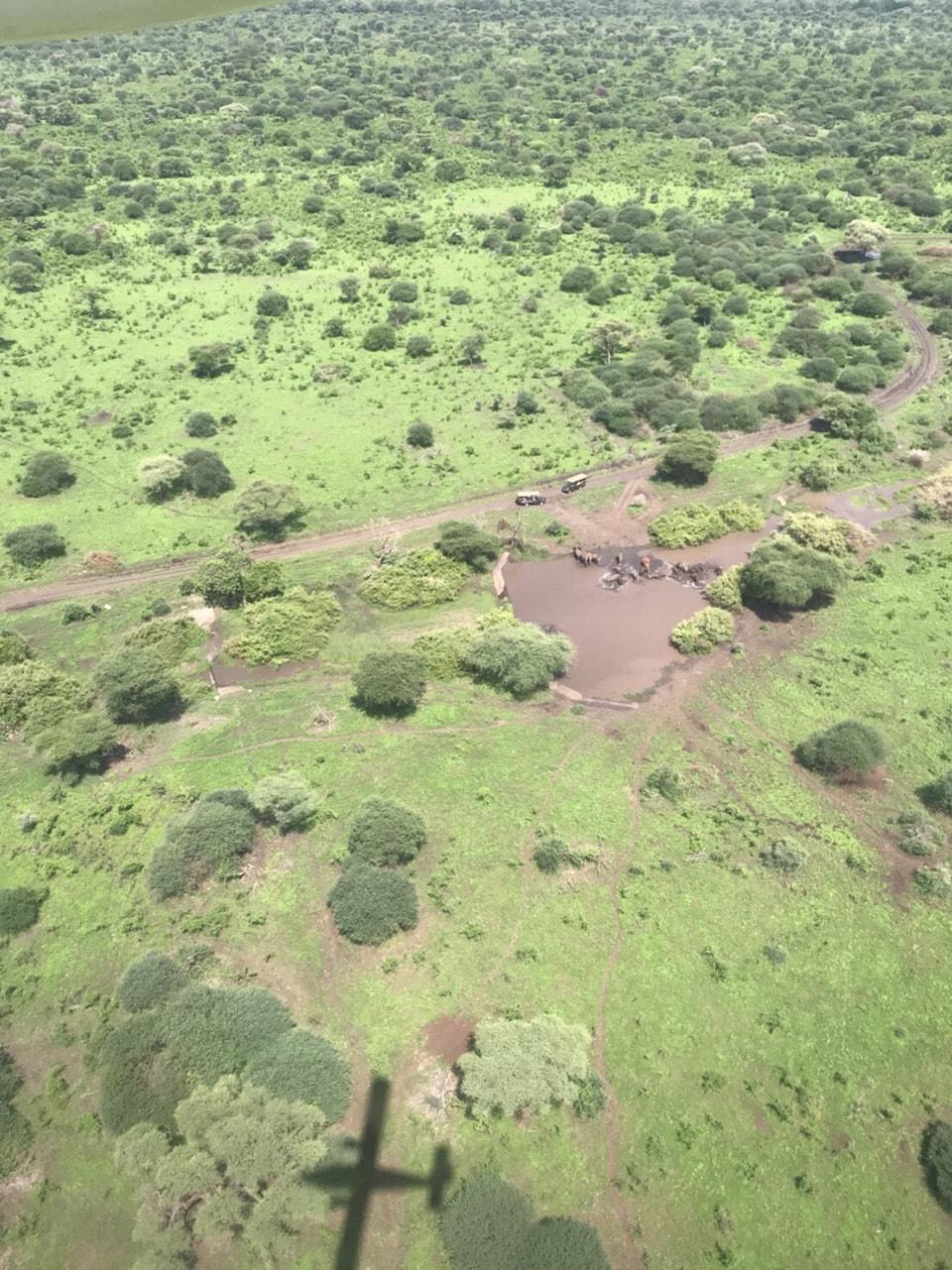 ナイロビから国内線でロイサバに向かう時、上空から撮影。小さな飛行機の影とともに、ゾウの水浴びの様子を眺めることができました。