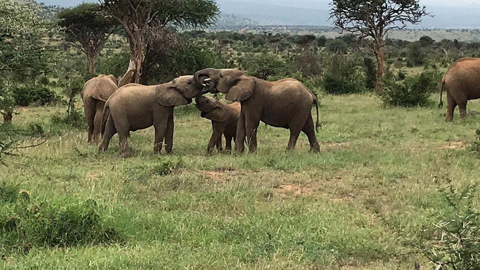 ケニアでのサファリ中にゾウの家族に遭遇。特に子供達は、まるで人間の子供のようにふざけて遊んでいる姿が印象的でした。