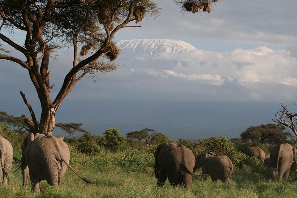 憧れのキリマンジャロを見ることができました!象とキリマンジャロは美しい大切な思い出になりました。