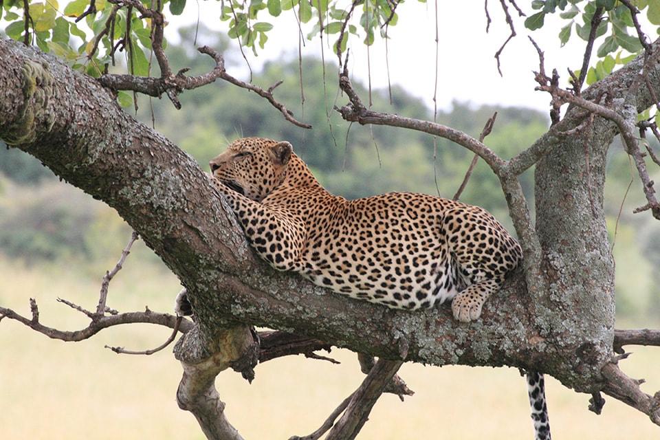 雨季は動物がのんびり幸せそうにしていました。現地の女性が乾季は動物も人間も苦しいと言っていましたが、雨季は皆がくつろげる大切な時期だと認識しました。動物の王国がこれからも続きますように。