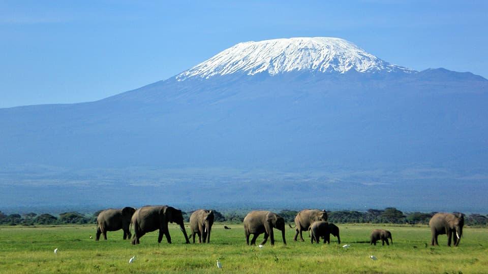 GWスペシャル】ケニア・サファリ・ハイライト 10日間 | アフリカ旅行の道祖神