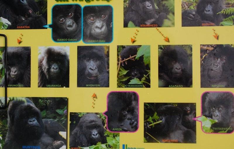 ルワンダでゴリラの命名式