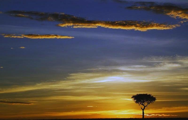 アフリカ、ケニアを舞台にした映画「愛と悲しみの果て」