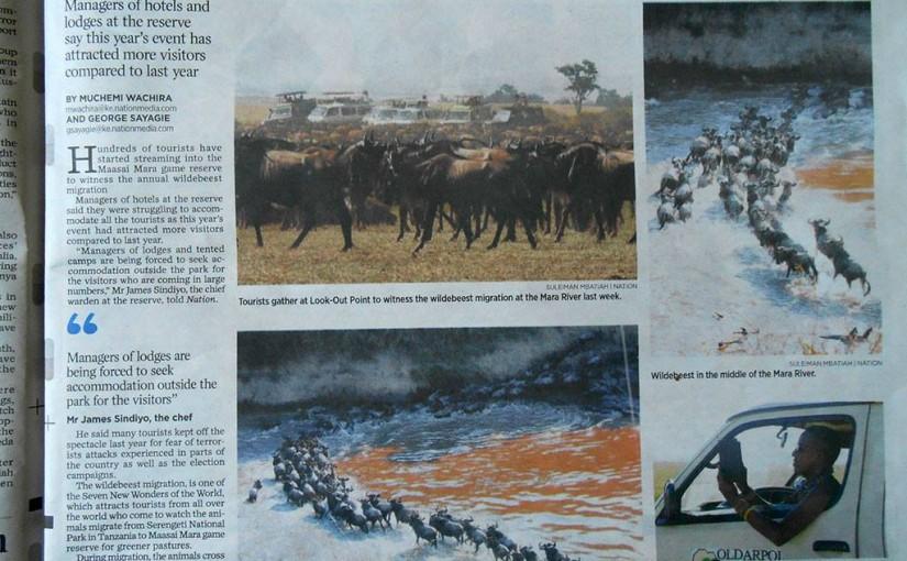 ケニアのマサイ・マラ国立保護区でヌーの川渡り その3