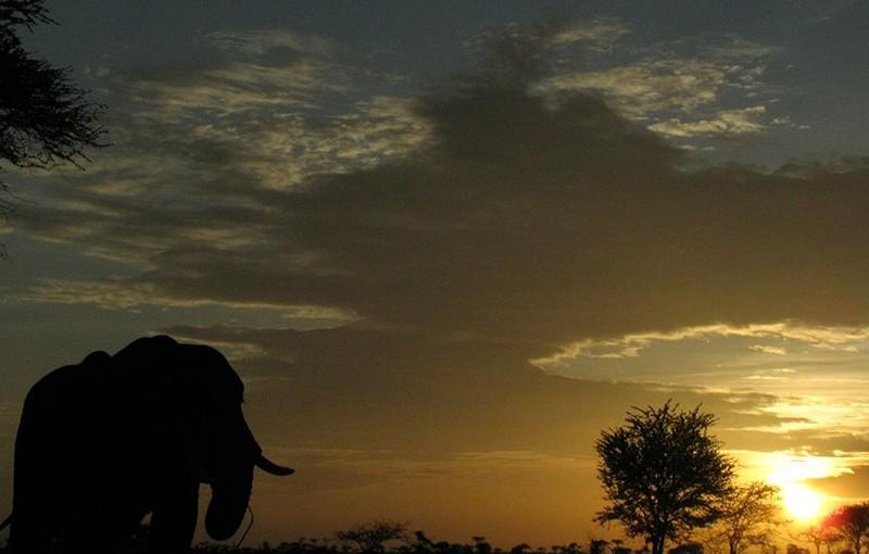 タンザニア・キャンプ・ツアー