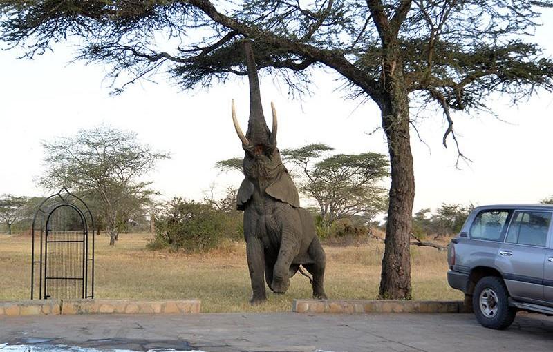 タンザニア、セレンゲティ国立公園のある夜の出来事