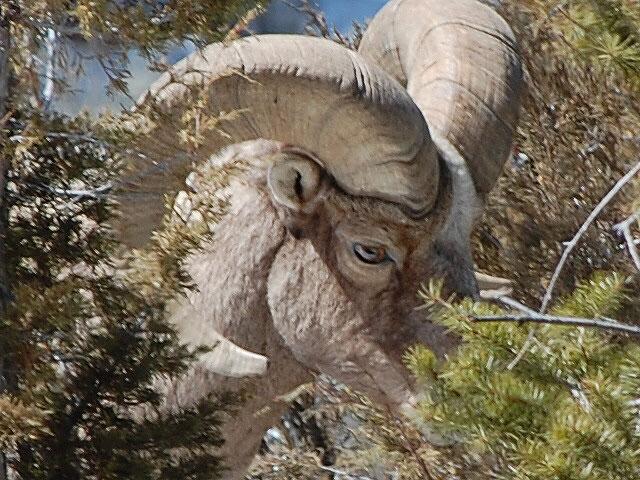 イエローストーン国立公園の画像 p1_18