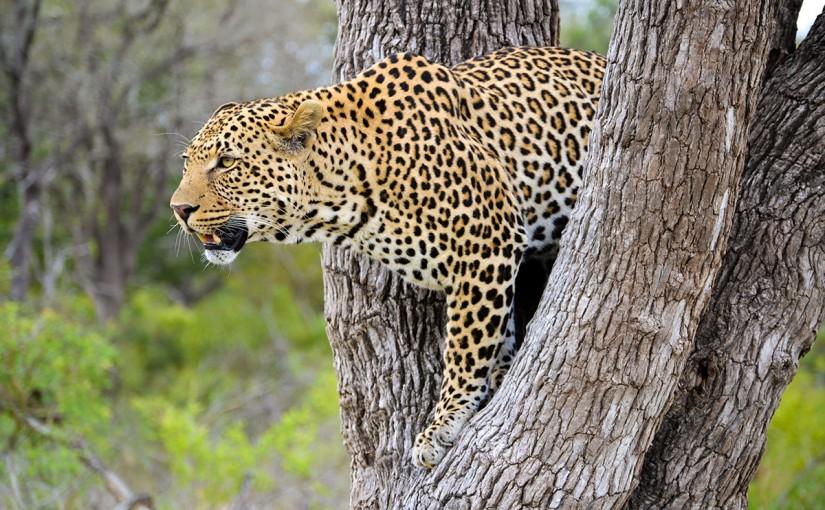 南アフリカ クルーガー国立公園 サファリ&ウォーク 8日間