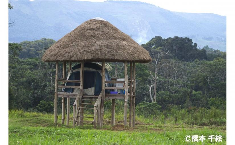 チンパンジーの森へ ウガンダでの調査体験の旅 10日間