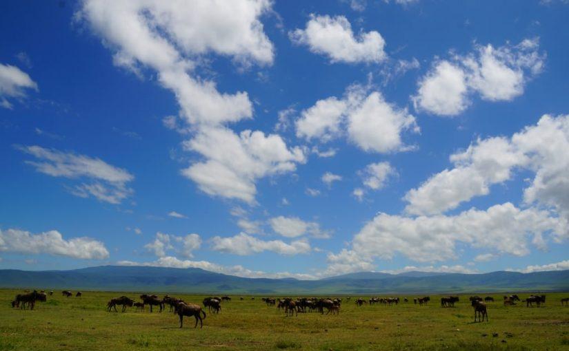 タンザニア こだわりのロッジに泊まるサファリ11日間 手配旅行レポート