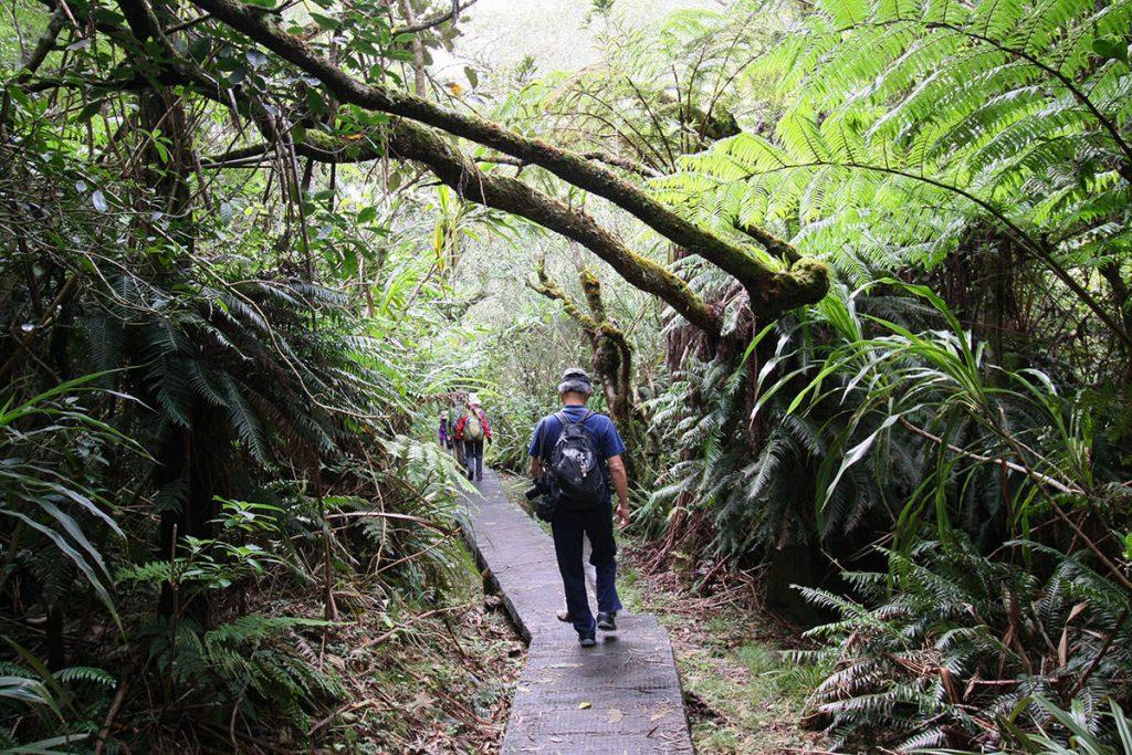 整備された木道を歩きます