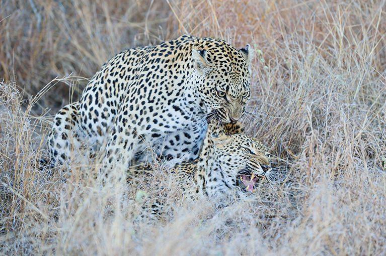 WILD AFRICA 26 マラマラ・マシャトゥ スーパーサファリ