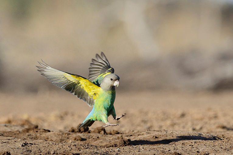WILD AFRICA 27 鳥撮りのサファリ
