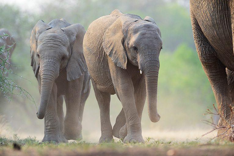 WILD AFRICA 32 アフリカゾウは静かに歩く