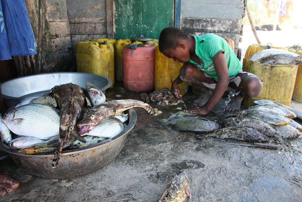 売り物の魚を捌く男の子。