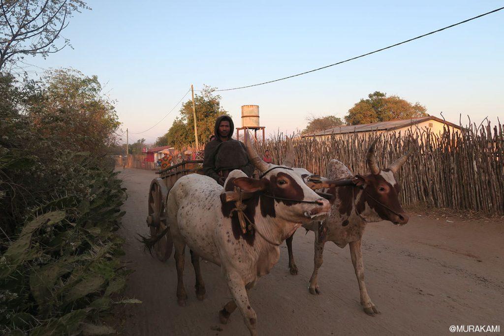 道で行き交うのは、車よりも牛車が多い