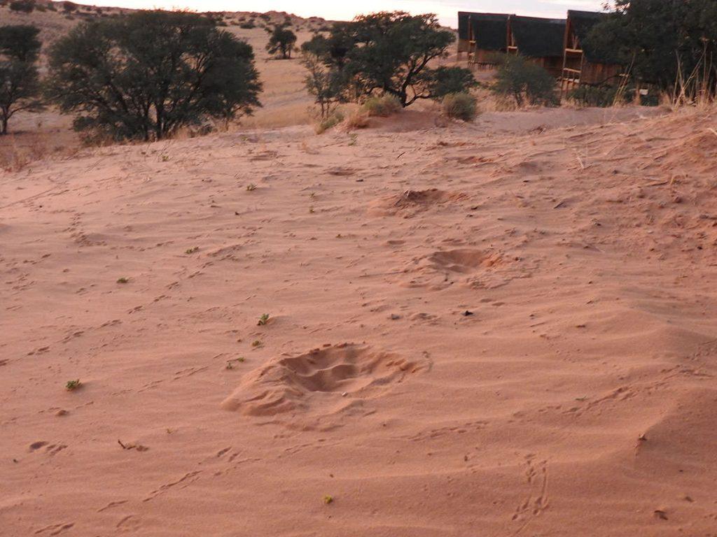 オスライオンの足跡があります。ひとつ前の写真と同じ場所です。消火器の隣を通って行きました。
