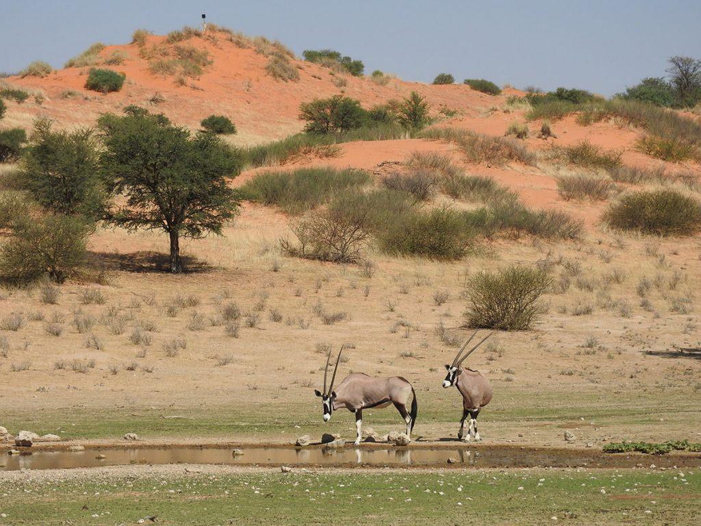 向こう側の赤い砂丘、手前の水場にはよく見られるゲムズボック(オリックス)