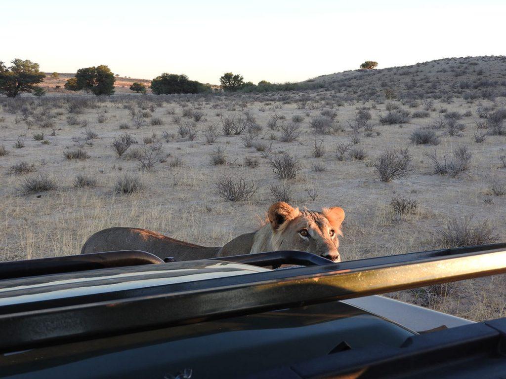 まるでチェックをするように車をのそばに来て様子を伺ってました。2m先で睨まれると縮こまるしかありません。