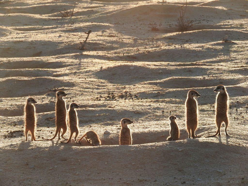 朝日が当たって日向ぼっこの様子はお客さんに大人気でした。