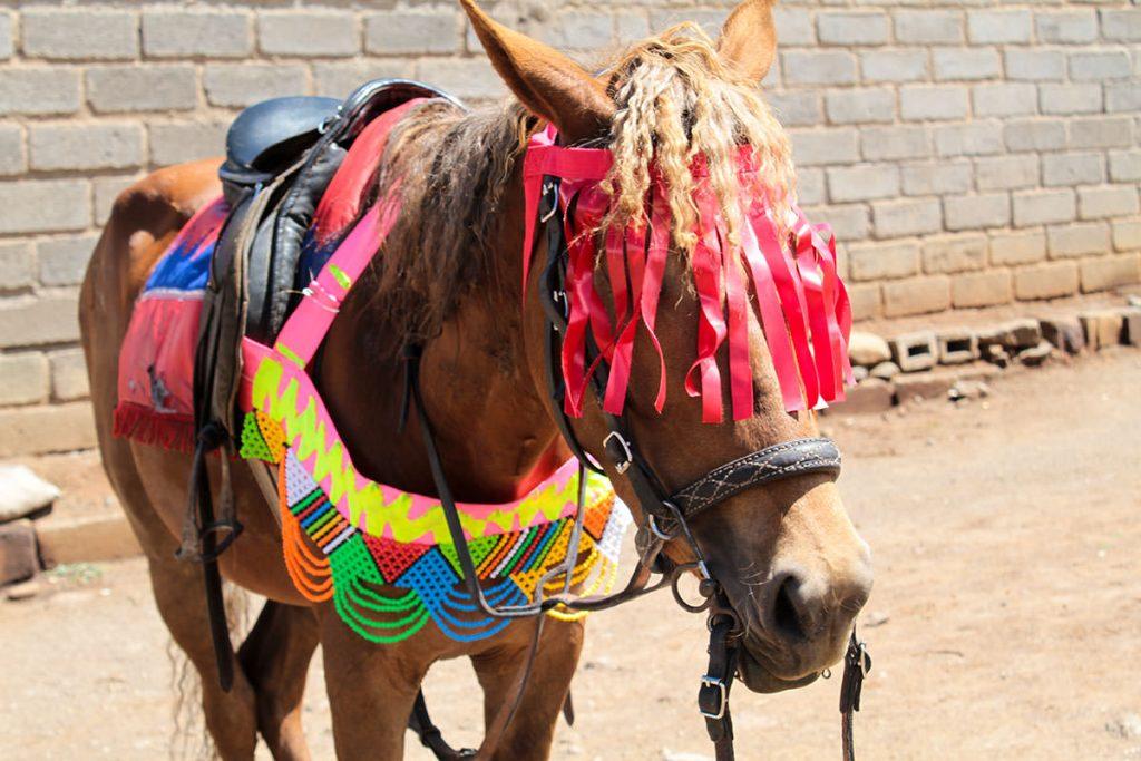 ニューイヤーに向けて装飾された馬