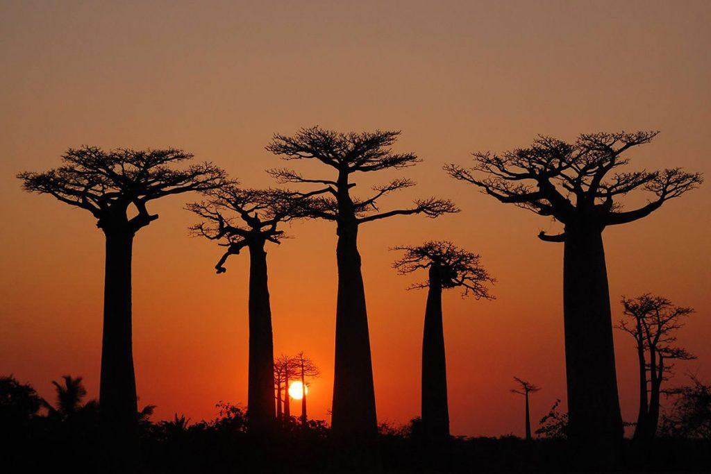 バオバブの夕景