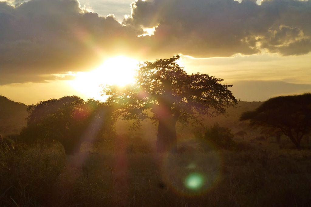 最後に滞在した、タランギレの夕日とバオバブ。たくさんのバオバブやゾウに出会いました!