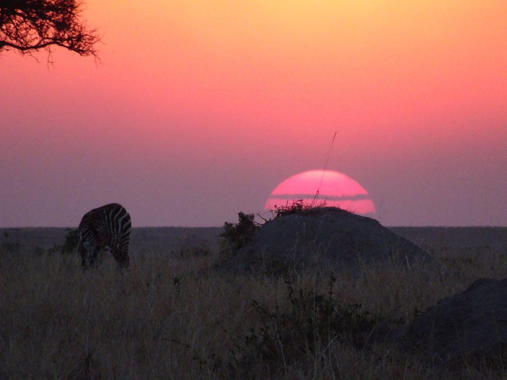 シマウマと夕陽