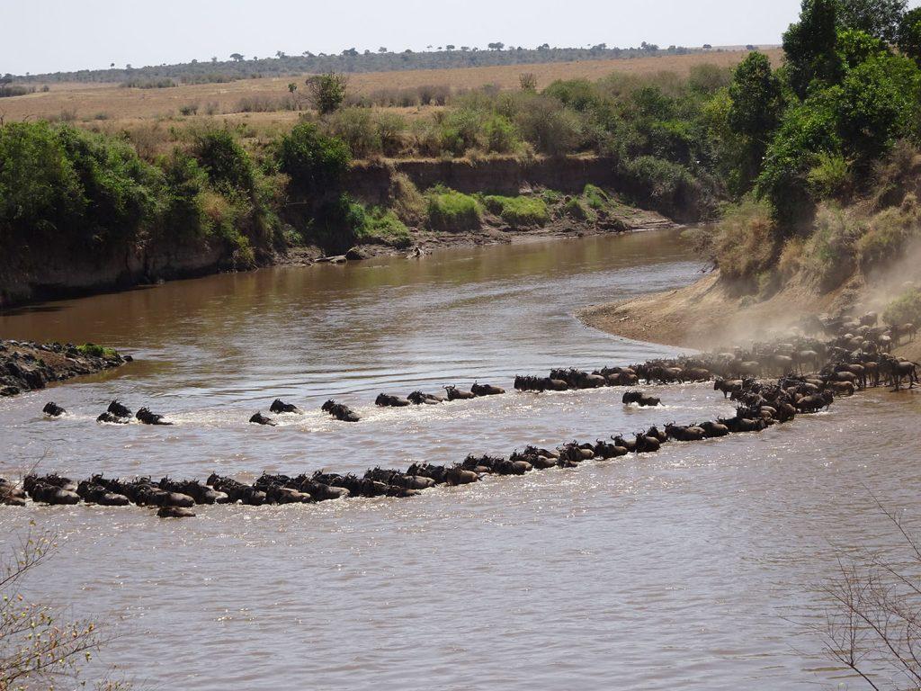 ヌーの川渡り