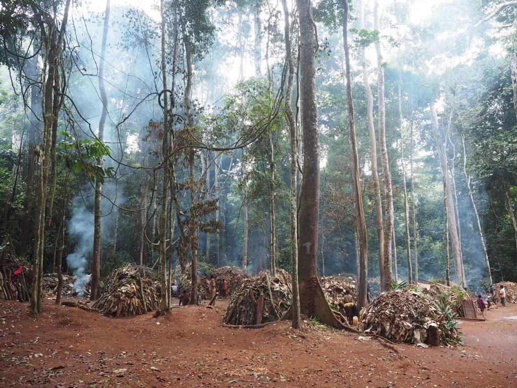 森に抱かれるようにある集落