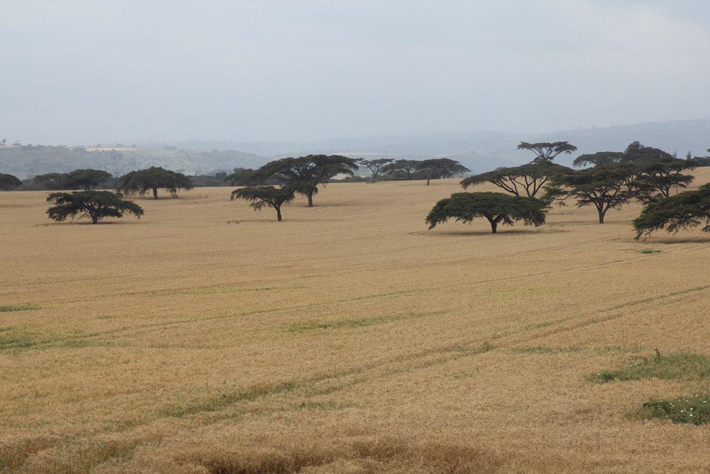 ケニアは農業にも力を入れている