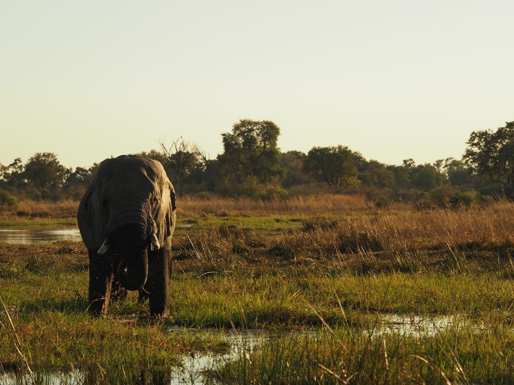 水場が多い為、夕暮れ時は一休みしに来た動物を狙うチャンスです。