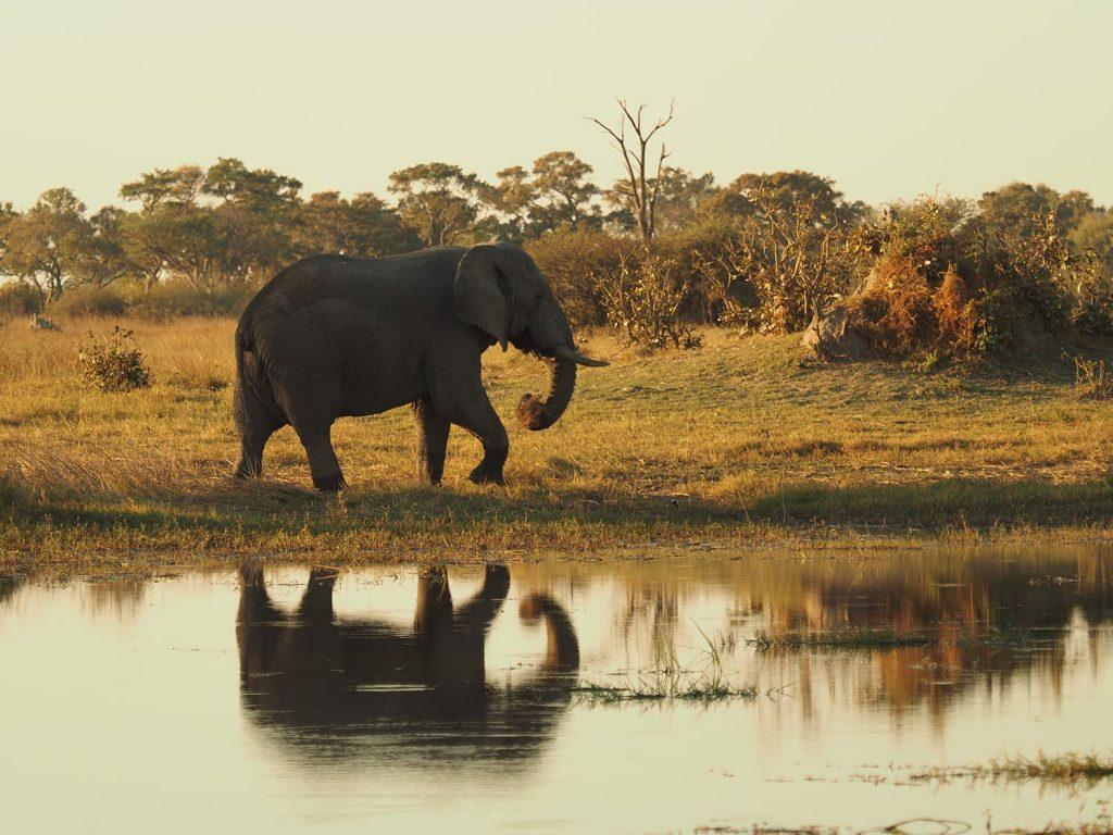 ボツワナと言えばゾウですね。