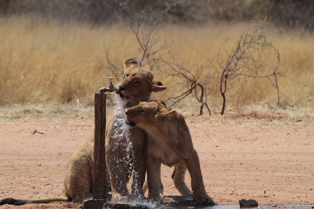 キャンプサイトの水場で乾きを潤す子ども達1