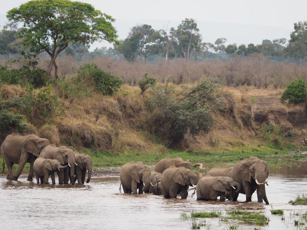 そのままゾウが河を渡ります。余裕の河渡り。