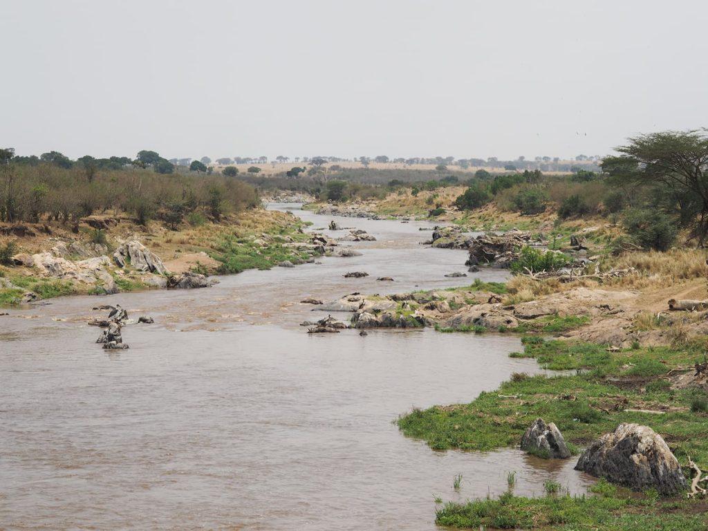 なかなかお目当ての『ヌーの河渡り』に出会えません。マラ河の下流まで来てみましたが、静かな河の風景です。うーん。