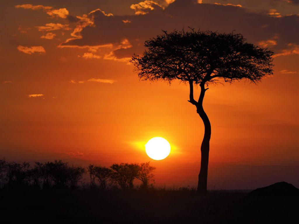 アカシアの樹と夕陽。よく見るショットですが、やっぱりいいですね。