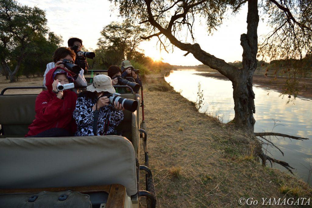 サファリにはオープンカーを使用するので撮影条件は非常によい。早朝、ルアングワ川沿いで川を渡るゾウたちを撮影した時の模様。