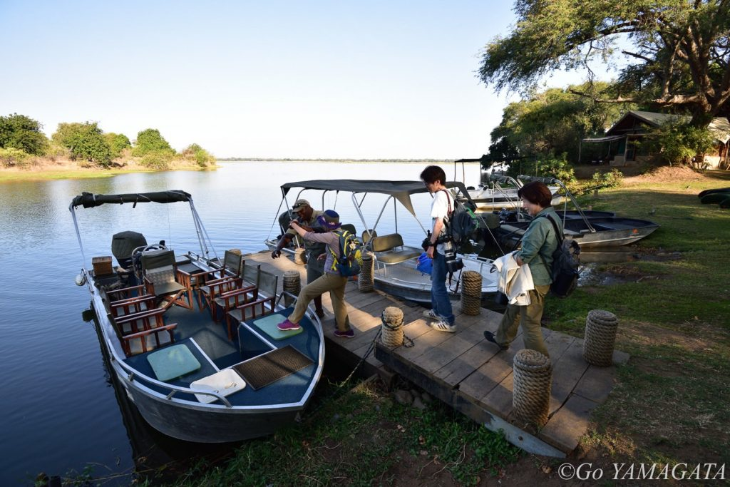 ロウワー・ザンベジ名物の一つがボートサファリ。
